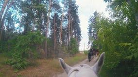Equitação branca no caminho na floresta vídeos de arquivo