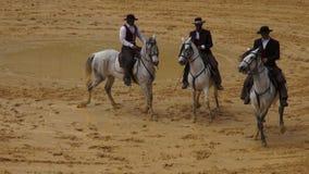 Equitação, cavalos, animais video estoque
