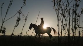 Equitação da amazona em seu cavalo sobre um por do sol do prado Silhueta Movimento lento Vista lateral video estoque