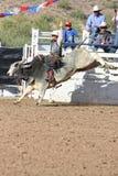 Equitação de Bull do rodeio Foto de Stock
