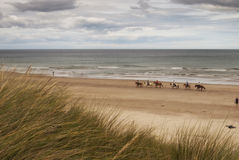 Equitação de cavalo da praia Foto de Stock