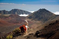 Equitação de cavalo em 10,000ft Imagem de Stock Royalty Free