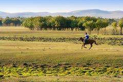 Equitação de cavalo na pastagem Imagem de Stock