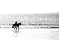 Equitação de cavalo na praia Imagens de Stock