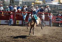 Equitação de cavalo selvagem do cowboy foto de stock