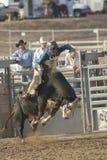 Equitação de San Dimas Bull Imagem de Stock