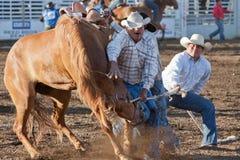 Equitação do Bronc da equipe - irmãs, rodeio 2011 de Oregon Fotos de Stock Royalty Free