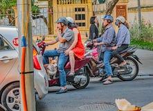 Equitação do cão do Corgi em um 'trotinette' em Vietname fotografia de stock