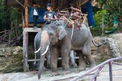 A equitação do elefante Imagens de Stock