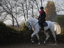 Equitação do por do sol Fotografia de Stock