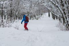 Equitação do Snowboarder ao longo da inclinação da floresta, após a queda de neve Imagem de Stock Royalty Free