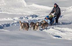 Equitação do trenó do cão, Switzerland Imagens de Stock