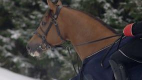 Equitação dos homens um cavalo marrom grande na paisagem nevado bonita do inverno Cavaleiro masculino que cantering com grande el vídeos de arquivo