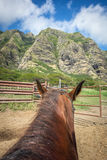 Equitação em Havaí Fotografia de Stock