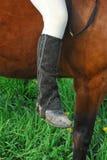 Equitação em pêlo Foto de Stock Royalty Free