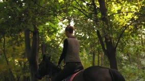 Equitação no cavaleiro fêmea novo da floresta do verão no cavalo em um galope obscuro da floresta Galope do fascínio horseback video estoque
