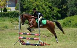 Equitação traseira do cavalo - mostre o salto Imagem de Stock Royalty Free