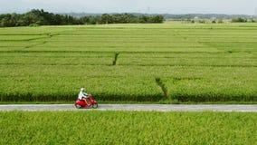 Equita??o do motorista de motocicleta no os campos do arroz Tiro exterior, paisagem do campo Curso e fotografia do esporte veloci video estoque