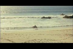 Equitación amplia del tiro o de la persona en la playa metrajes