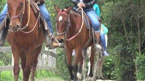 Equitación, caballos, animales almacen de video