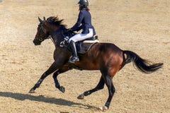 Equitación de la mujer joven en caballo corriente Imagen de archivo libre de regalías