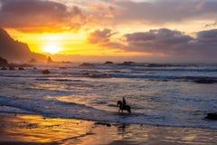 Equitación en la playa del océano en fondo de la puesta del sol fotografía de archivo libre de regalías