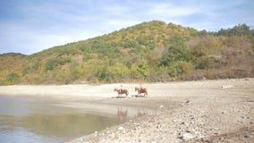 Equitación en las montañas, nadando en el lago almacen de video