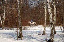 equitación en parque del invierno Foto de archivo