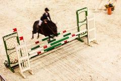 equitation покажите скакать, лошадь и всадника над скачкой стоковая фотография rf