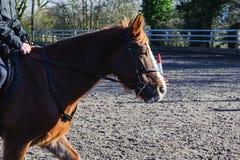 Equitazione al recinto chiuso Immagini Stock