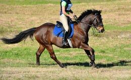 Equitazione del paese trasversale Fotografie Stock