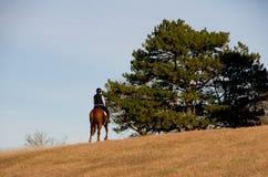 Equitazione nel campo immagine stock libera da diritti