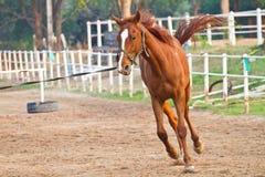 Equitazione nell'azienda agricola Immagine Stock