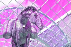 Equus Altus Royalty-vrije Stock Afbeeldingen