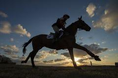 Equus ferus caballus - Horse Stock Photo