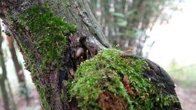 Er is een paddestoel op een dood hout royalty-vrije stock afbeelding