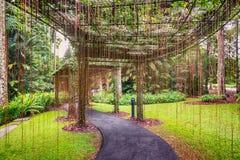 Er Gehweg, Vorhang von Wurzeln in botanischen Gärten Singapurs stockfotografie