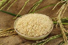 Er hat ein mildes nussartiges Aroma, ist zäher und nahrhafter als weißer Reis Stockfotografie