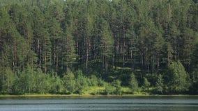 Er is mooi groen landschap van meerkust stock videobeelden