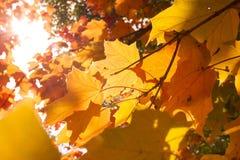 1er octobre Photos libres de droits