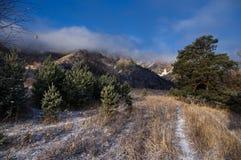 Er schleppt über dem Feld mit Frost bedecktem Gras unter Kiefern auf dem Hintergrund von felsigen Bergen unter blauem Himmel, Alt Lizenzfreies Stockbild