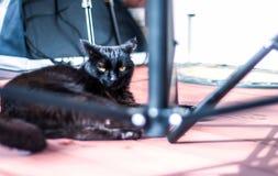 Er schwarze Katze liegt auf dem Portal Stockfotos