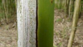 Er is stilleven aan de kant van een bamboe dat heeft vernietigd stock foto