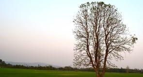 Er zijn geen bladeren op de bomenpadievelden en de ochtendhemel Stock Foto's