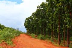 Er zijn ruwe wegen in het Bosbehang stock foto