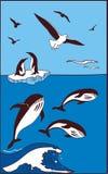 Er zijn walvis, pinguïnen en zeemeeuwen Stock Fotografie