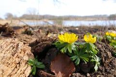 Erantis with view to the lake Stock Image