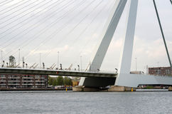 Erasmus Bridge Photo libre de droits