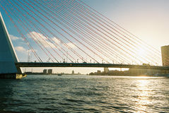Erasmus Bridge Fotografía de archivo libre de regalías