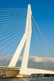 Erasmus Bridge across New Meuse River in Rotterdam Royalty Free Stock Photography
